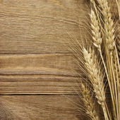 Spike of wheat — Stockfoto
