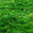 Aerial trees - Stock Photo