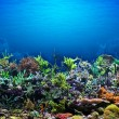 Coral Reef — Stock Photo #9926904