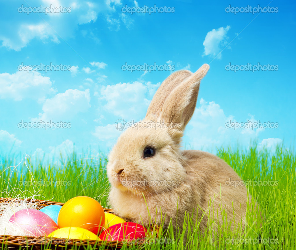 Little Easter bunny and Easter eggs on green grass  Stock Photo #9927171