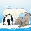 Vector de stock : Arctic and Antarctic