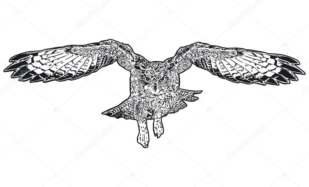Owl flying — Stock Vector #8340677