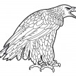Eagle graphics — Stock Vector