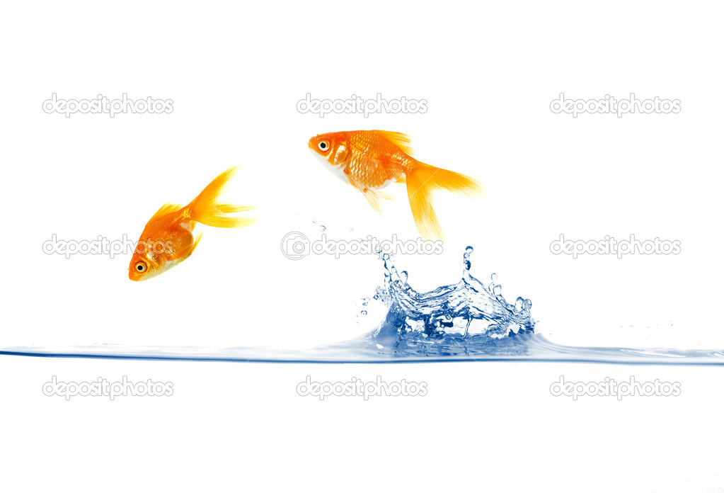 Goldfish jumping out of the water isolated on white — Stock Photo #9690765