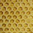Bee wax background — Stock Photo #8741107