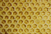 Bee wax background — Stock Photo