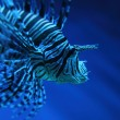 Lion fish (dragonfish, scorpionfish) — Stock Photo