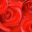 Rose background — Stock Photo #9566346