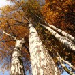 Old tree in the autumn — Stock Photo #9835563
