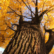 Old tree in the autumn — Stock Photo #9835590