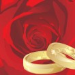 Vector golden wedding rings with rose — Stock Vector