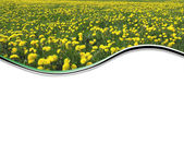 Flower background — Stock Photo