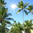 Stock Photo: Sunny day in tropics