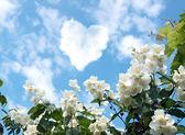 Nube a forma di cuore — Foto Stock