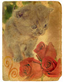Kitten and roses. Old postcard. — Stock Photo