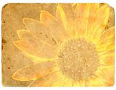 Yellow flower. Old postcard. — Stock Photo