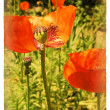 Red Poppy. Old postcard - Foto Stock
