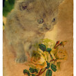 Royalty-Free Stock Photo: Kitten and Roses. Old postcard.