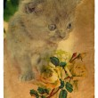 Kitten and Roses. Old postcard. - Stockfoto