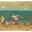 Stock Photo: Seascape with seagulls. Old postcard.