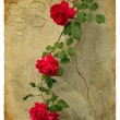 Roses. Old postcard — Stock Photo #9053288