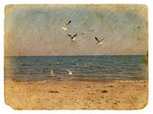 Seascape with seagulls. Old postcard — Stock Photo