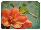 Pink flower. Old postcard — Stock Photo