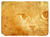 Cat выразительные глаза. старая открытка. — Стоковое фото