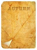 Autumn maple leaf. Old postcard. — Stock fotografie