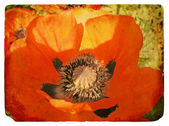 Red Poppy. Old postcard — Stock Photo