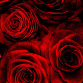 Abstract grunge textured background with roses — Stock Photo