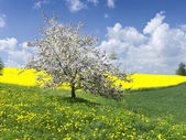 Landscape with apple tree — Stock Photo