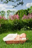 0-7 bebê deys. bebê recém-nascido, dorme na cesta, ao ar livre. — Fotografia Stock