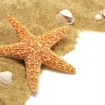 Sand and seastar border — Stock Photo