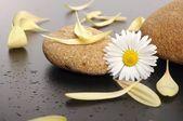 Petali gialli sulle pietre — Foto Stock