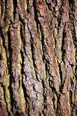 Tree texture — Stockfoto
