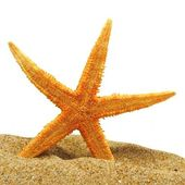 Seastar and sand bank — Stock Photo
