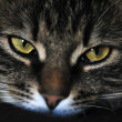 Stock Photo: Cat eyes