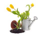 Plantio de jardim — Foto Stock
