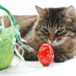 Cat and easter eggs — Stock Photo