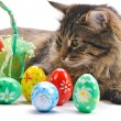 Cat and easter eggs - Stock Photo