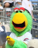 The Pittsburgh Pirate Parrot — Stock Photo