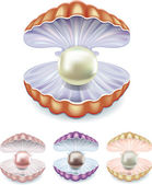 Set of pearls in the shells of different colors — Stock Vector