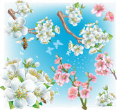 Cherry blossom — Stock Vector
