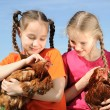 Two girls with chickens — Stock Photo