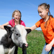 Little girls with calf — Stock Photo