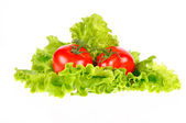 Tomato and salad leaf isolated on white background — Stock Photo