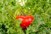 Tomato on salad leaf — Stockfoto