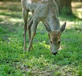 Pasie jelenie w lesie — Zdjęcie stockowe