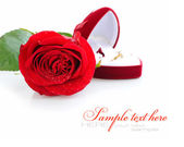 Red rose and red velvet box with golden ring on white background — Stock Photo